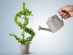 Growing a money tree